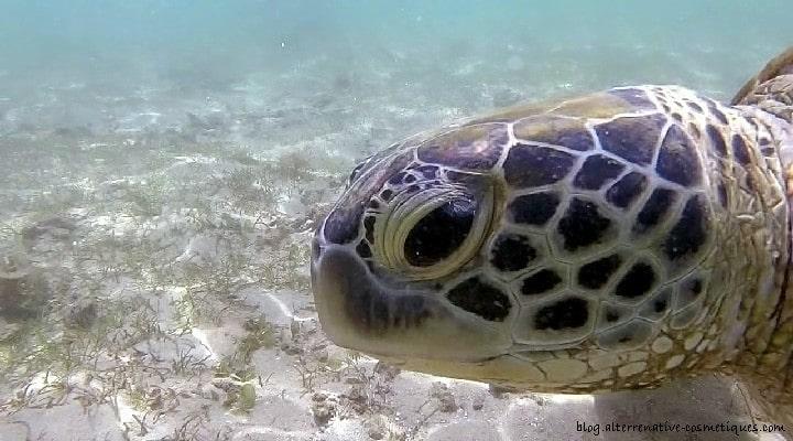 snorkeling tortue sri lanka